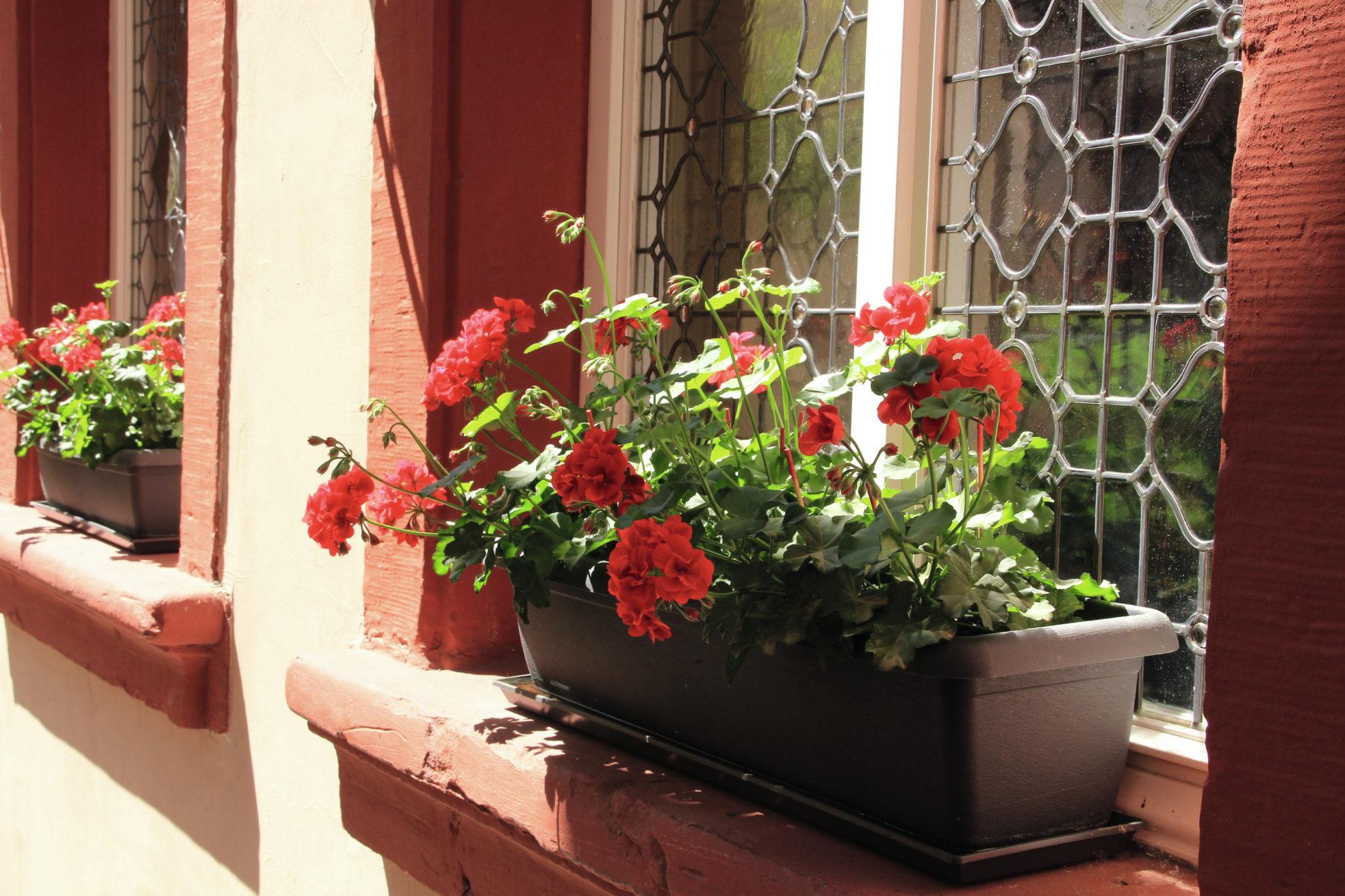 Ein Blumenkasten mit roten Blüten im Fenster einer sandroten Hauswand